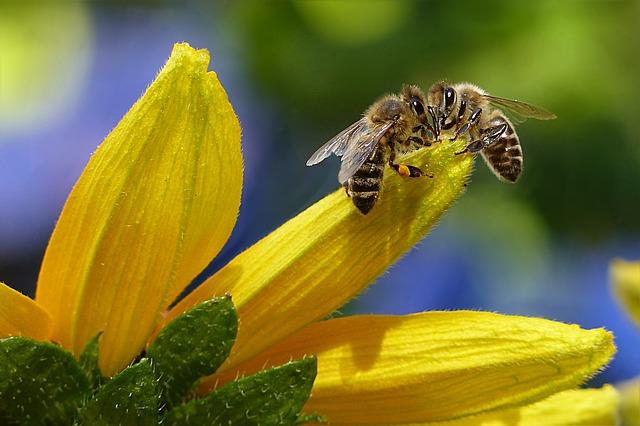 Pozor na falošné včely